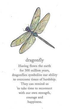 Image result for dragonfly having flown the earth for 300 million years