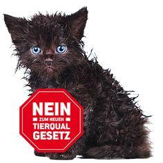 Bitte unterzeichnen! Owl, Inspirational, Animals, Animal Rescue, You're Welcome, Animais, Animales, Animaux, Owls