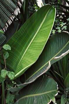 line x shape x colour: some green: Tropical Leaves, Tropical Plants, Grand Cactus, Leaf Photography, Travel Photography, Plant Wallpaper, Plant Aesthetic, Tropical Vibes, Aesthetic Pictures