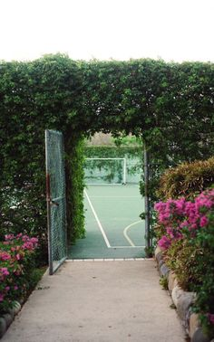 Tennis court - hardy perennial vine covering chain link? How would it look in winter? Make a nice entry gate.