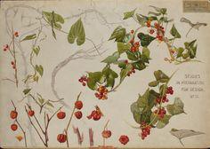 "design-is-fine: "" George Marples, Botanical Studies in preparation for Design, 1898. London. Watercolor. Via Museum of Applied Arts, Budapest. """