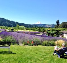Awe...Sit awhile & relax in the warm Lavender breeze! #calming #aromatherapy #relaxing #hoodriverlavender #organic #hoodriver #farm #upick #oregon #traveloregon #lavender #garden