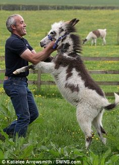 Happy: Moses is thriving at the Scottish Borders Donkey Sanctuary, in Roxburghshire
