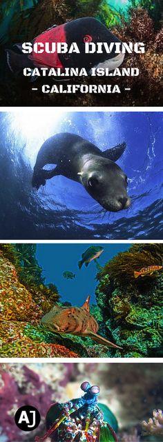 Scuba Diving Adventures in Catalina Island, California.
