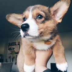Can I have him plezzzz? Puppies And Kitties, Cute Puppies, Cute Dogs, Animals And Pets, Baby Animals, Cute Animals, Silly Dogs, Funny Dogs, Funny Cat Pictures