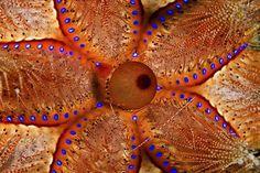 Underwater blossom   By: Udi Golan