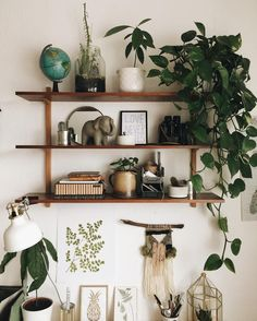 friederike • 21 • just a girl doing live in a tiny cozy apartment with her plant family •