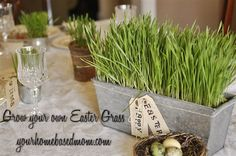 grow your own Easter grass! why didn't i think of that!!