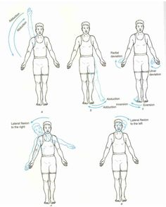 axis and planes of motion  flexion extension