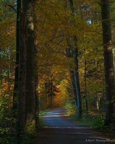 Zurich, Switzerland, Country Roads, Autumn, Plants, Photography, Painting, Fotografie, Fall