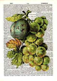 "Dictionary Art Print,Vintage Poster,Digital illustration drawing,gift ideas,home & Living,decorative Kitchen,wall decor,mixed media,""Fruit""3"