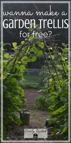 Wanna make your own garden trellis for free? | DIY garden trellis | garden trellis ideas | homesteading | farm to table | living simply | soulyrested.com