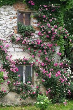 Gorgeous pink roses climb up this stone house.
