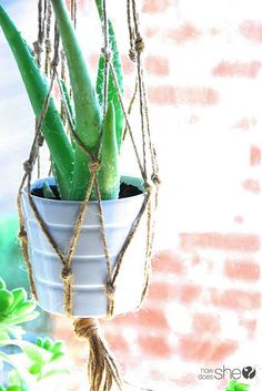 DIY Macrame and Healthy Houseplants {Aloe Vera, Boston Fern, English Ivy, and Peace Lily}.  For the guest room plant. Propagate the ivy.