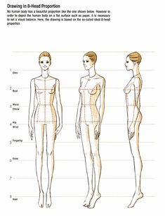 Body Drawing in 8-Head - Proportion (1)