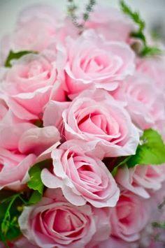 Rosa #Rosen Stehen für Dankbarkeit, Anerkennung, Bewunderung und Sympathie