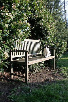 George Hogging the Garden bench