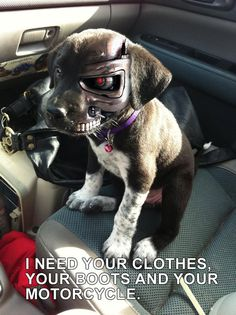 Awesome terminator puppy