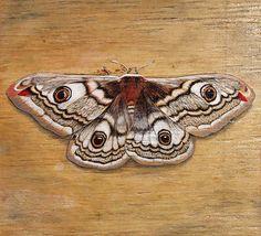 painting on wood | emperor moth 2010 6 x 6 latex paint ink on wood