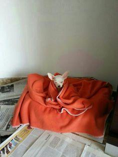 Lola durmiendo sentada