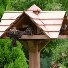 For The Birds_a range of bird feeders and tables and nesting boxes
