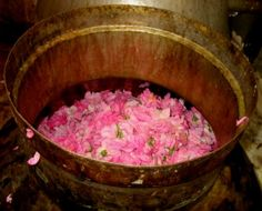DIY Rose Water & Benefits ... Rose water came into scenario in the 10Th Century from Persia. Most of the rose oils and rose water still come from that region only. Rose water preparation requires many petals, but the rose water is required for many purposes. It has many health benefits.