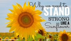 In a Sea of Sunflowers Will YOU Stand Strong? Plus FREE Watercolor Sunflower Printable - Devoted to Maker