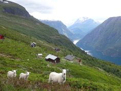 One Sunday in July 2013, in the mountains at Fjørå, near #Valldal, #Norway