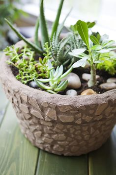 Succulent garden with mosaic pot