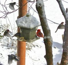 BirdSpotter 2013 Submissions - FeederWatch