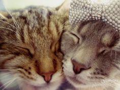 Gatos♥