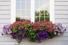 Best Plants for Window Boxes - Western Garden Centers