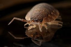 7 Little-Known Facts About Bed Bugs And How To Get Rid Of Bloodsucking Insects