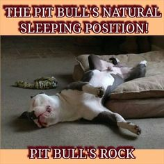 Just one more adorable thing pitbulls do :).