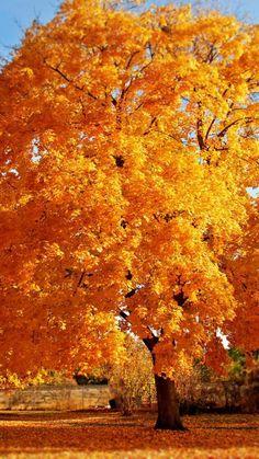 trees, autumn, park, fallen