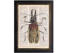 Fire Beetle Insect Art Bug design printed by VintageDictionaryArt
