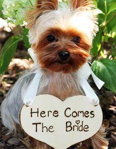 Haz de tu mascota el invitado más top de tu matrimonio | All You Need Is Love