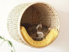 A diy cat project so easy even the laziest of pinners can do it TONIGHT in less than 10 minutes! Wicker basket + folded up blanket = BOOM! Instant private kitty oasis perfect for escaping annoying humans. Mine also particularly enjoy heights and napping out of direct light, so this is a perfect little hideaway spot! #catsdiyhacks #alabanza #catsdiyprojects