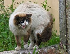 Can Feral Cats Be Tamed? - http://www.kittenswhiskers.com/can-feral-cats-be-tamed/