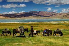 trekking across Ladakh via packhorses Tibet, Ladakh India, Tours, Aquarium, Travel Aesthetic, Himalayan, Travel Guides, Nepal, Trekking