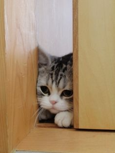 Can I come in? too cute!