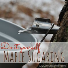 Do it Yourself Maple Sugaring | Serving Joyfully #homeschool #tapmytrees