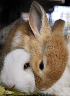 .Hahahaha.....I'm thinking my husband needs a rabbit for his 60th birthday.  These are too, too cute!!!!   WANT.....