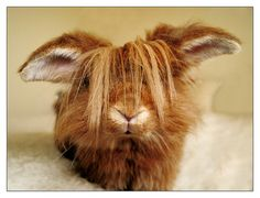 I'm a beiber bunny ... and NO my name's NOT Justin