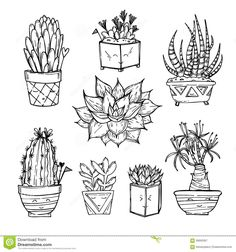 Hand drawn illustration - Set of cute cactus and succulents. Vector as vector file on ClipDealer - Royalty-free vector graphics: Hand drawn illustration - Set of cute cactus and succulents. Succulents Drawing, Cactus Drawing, Doodle Drawings, Doodle Art, Line Drawing, Painting & Drawing, Coloring Books, Coloring Pages, Colouring