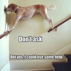 #thebestdogmemes #dogmemes #memes