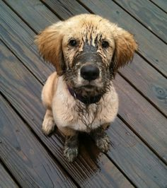 24 Best Wahl Dirty Dogs Finalists Images Puppys Animal Rescue
