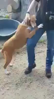 Animals Discover A Journalist went to cover a story about an animal shelter and ended up adopting this dog! Funny Animal Videos, Cute Funny Animals, Cute Baby Animals, Funny Dogs, Animals And Pets, Shelter Dogs, Animal Shelter, Animal Rescue, Cute Puppies