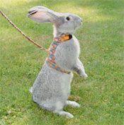 Peter's Rabbit Walking Jacket