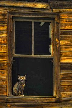 Cat in the window by ErkanKalenderli.deviantart.com on @deviantART